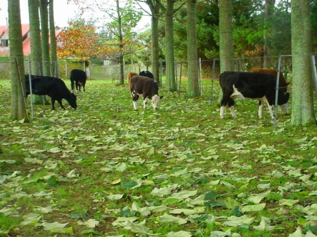 May leaf fall grazing